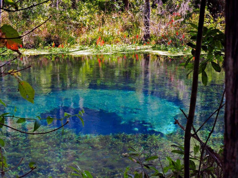Blue Hole at Ichetucknee Springs State Park