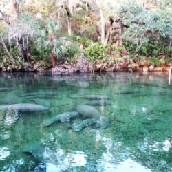 5 Best Natural Springs in Florida to Visit This Summer
