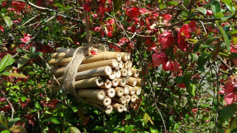 diy bamboo bee house habitat craft