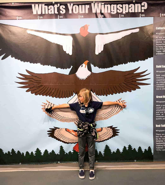 American Bald Eagle Foundation Haines Alaska wingspan