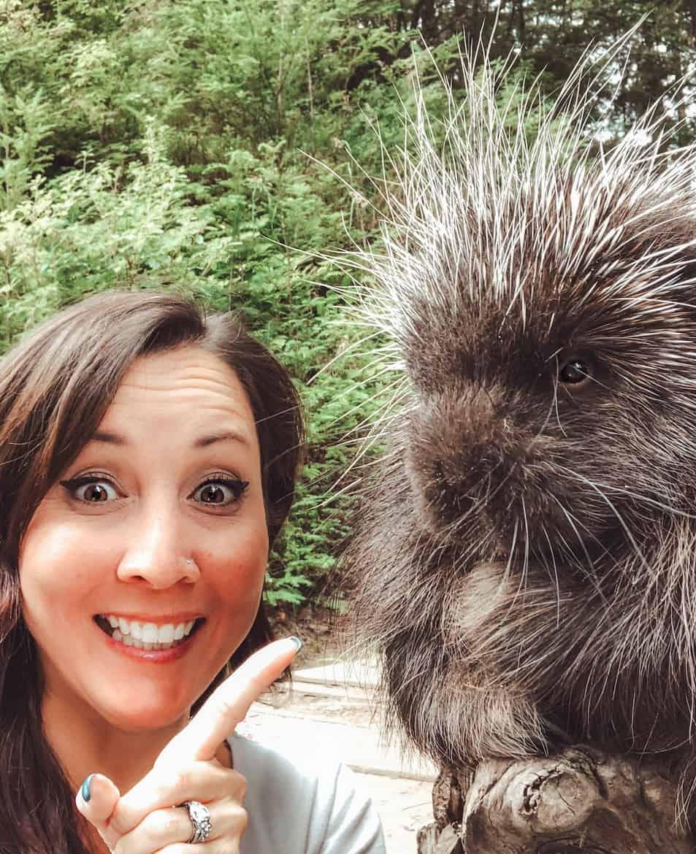 Kroschel Wildlife Center Haines Alaska porcupine