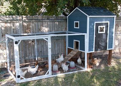 blue chicken coop diy