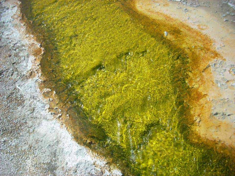 Yellowstone green