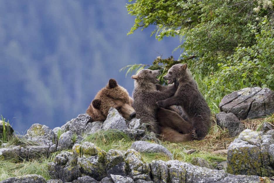 bears5346e4a9f2480