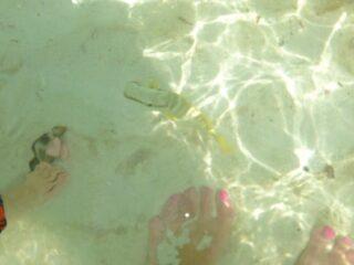 de palm island aruba 26 1