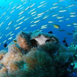 Scuba diving in Fiji and then some