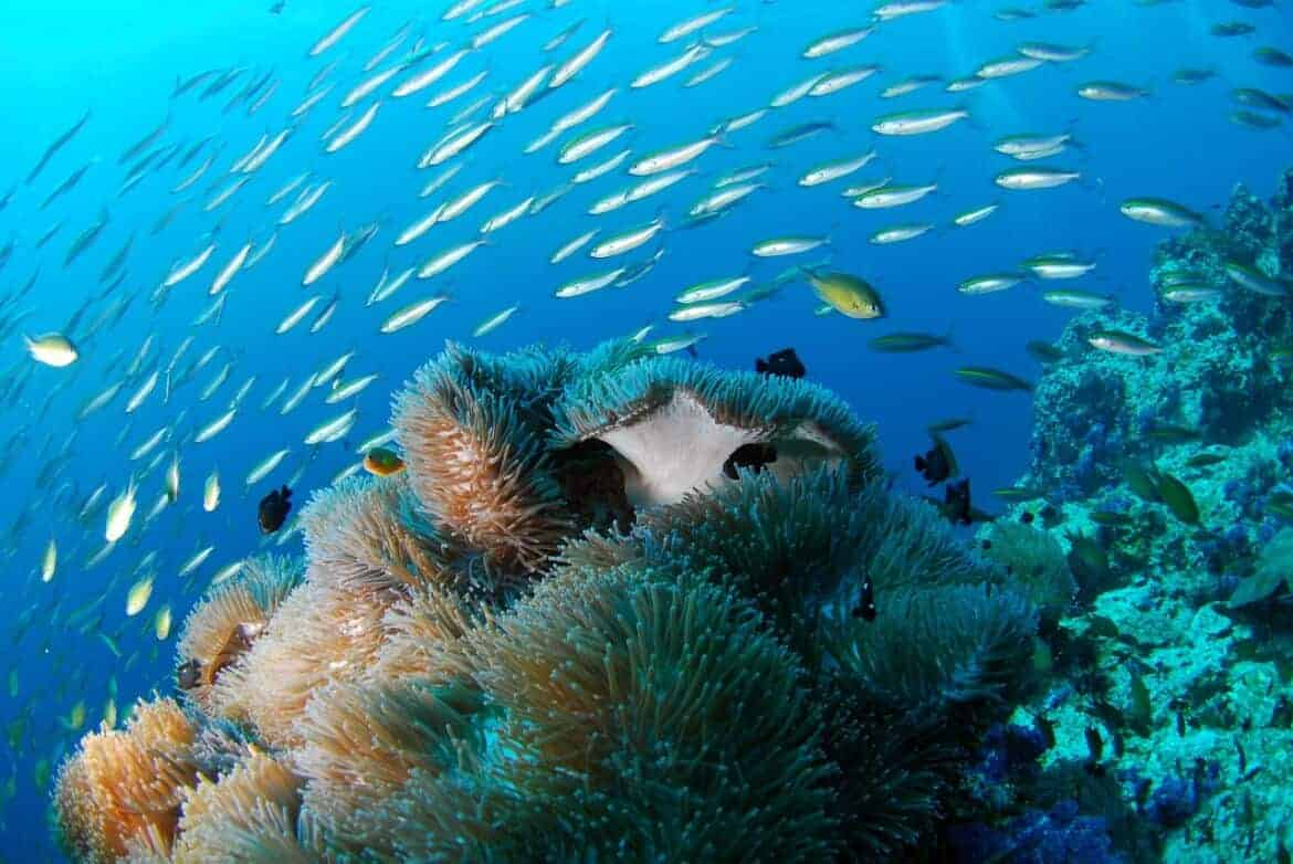 diving 689825 1280 - Scuba diving in Fiji and then some