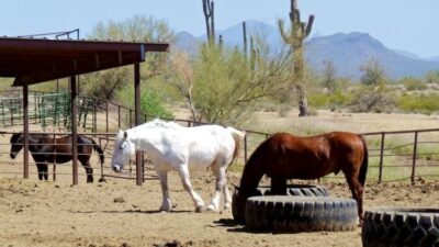 horseback riding in arizona 13 1