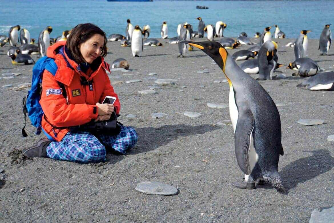 king penguin one on one