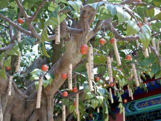 lantau island wishing tree bodhi 2 1