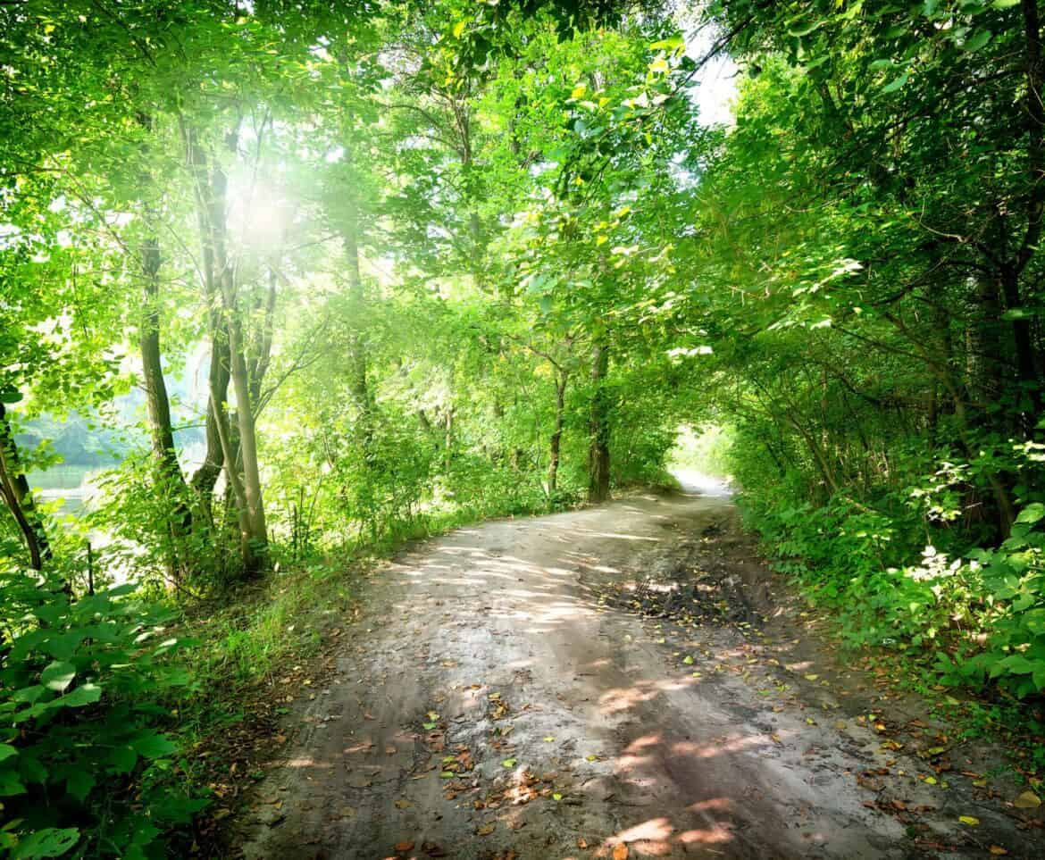 Dawn on the road in the forest in summer, Eco-friendly Travel Hacks