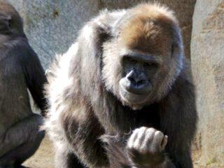 san diego zoo safari park 11
