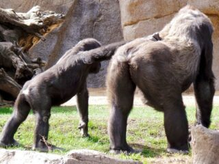 san diego zoo safari park 13
