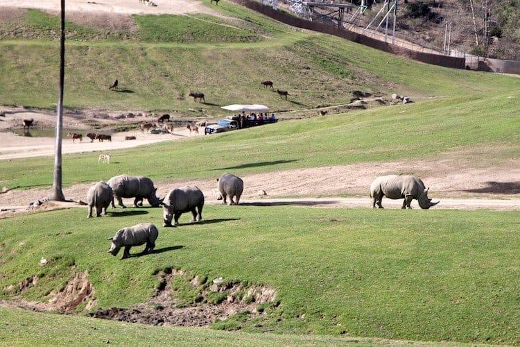 san diego zoo safari park 19 1
