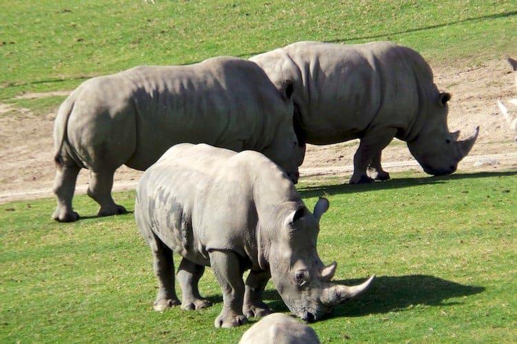san diego zoo safari park 20