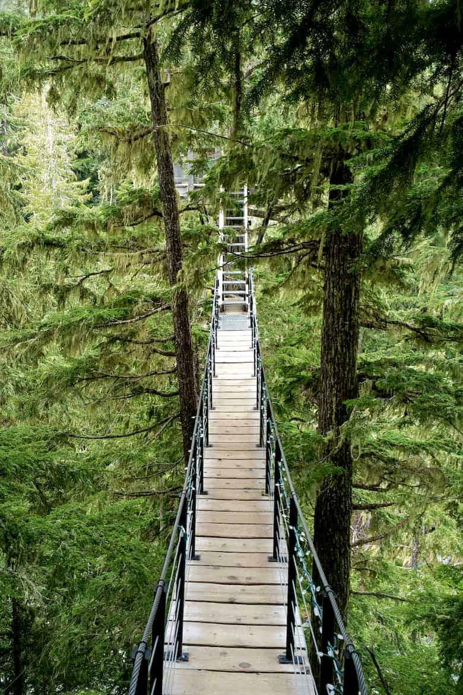whistler tree trek footbridge