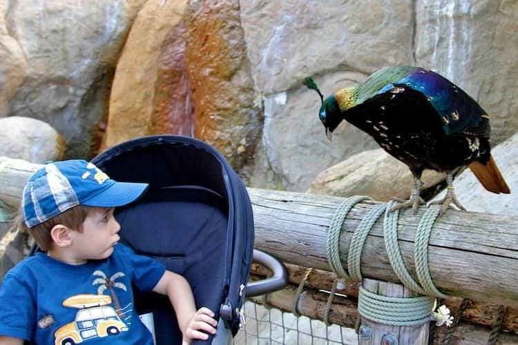san diego zoo safari park 15