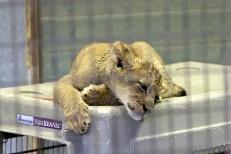 san diego zoo safari park 7