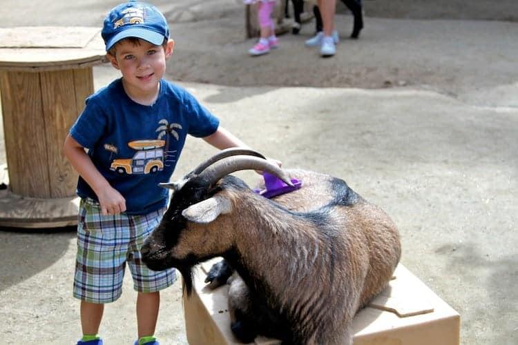 san diego zoo safari park 9