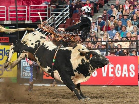 16463212 10155142642055832 5451258214962999166 o 560x420 - Save a Horse, Ride a Cowboy