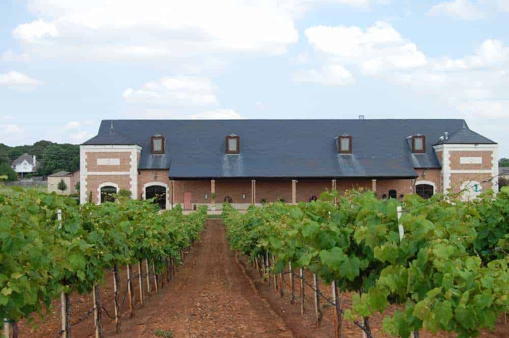 Delaney-Vineyards