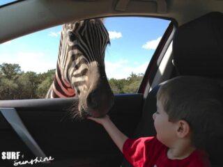 Natural Bridge Wildlife Ranch 12 320x240 - Who Wants to Go on a Texas Style African Wildlife Safari?