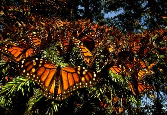 Butterflies Are A Natural Beauty: Wings Of Life
