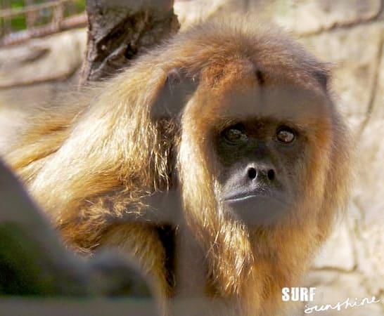 San Antonio Zoo 12