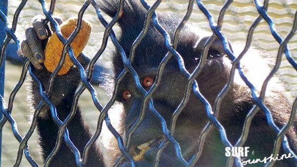 San Antonio Zoo 16