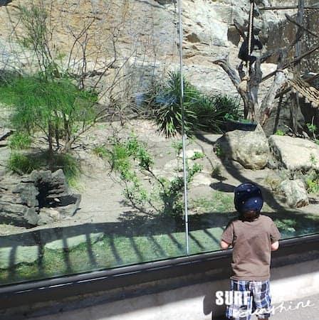 San Antonio Zoo 17