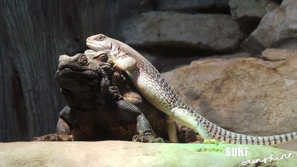 San Antonio Zoo 18
