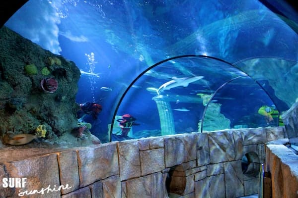 Sea Life Aquarium 8