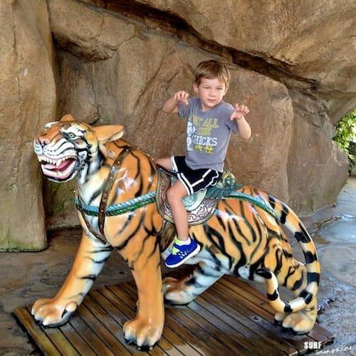 universal orlando bengal tiger