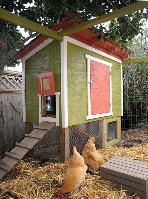 Free DIY Chicken Coop Plans for a multi level chicken coop with frenced in area and roost.