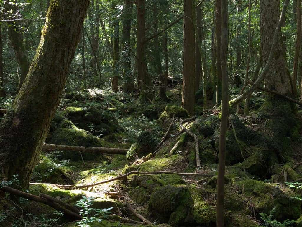 Aokigahara forest - Must-See Bizarre Places Around the World