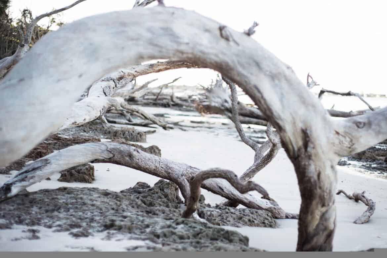 Boneyard Beach - Photographing the Hidden Gems of Jacksonville