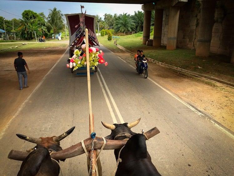 Bullock Cart Village3