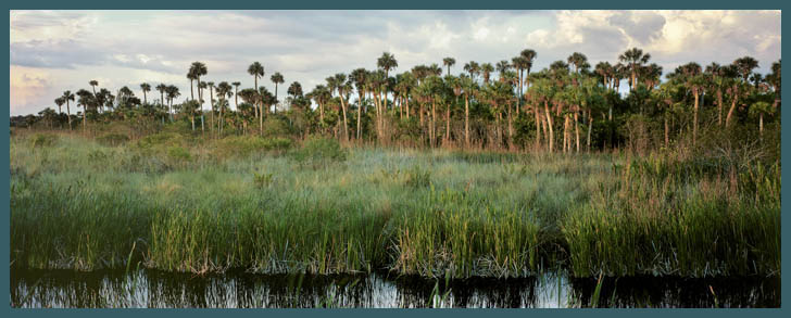 Beach House For Rent Everglades Fl