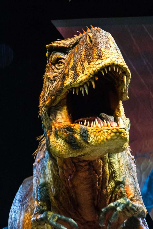 Tyrannosaurus Rex (Photo by Patrick Murphy)