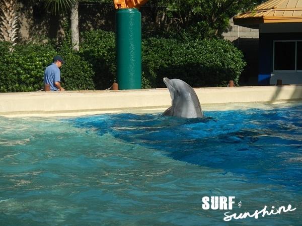 seaworld-san-antonio-dolphin