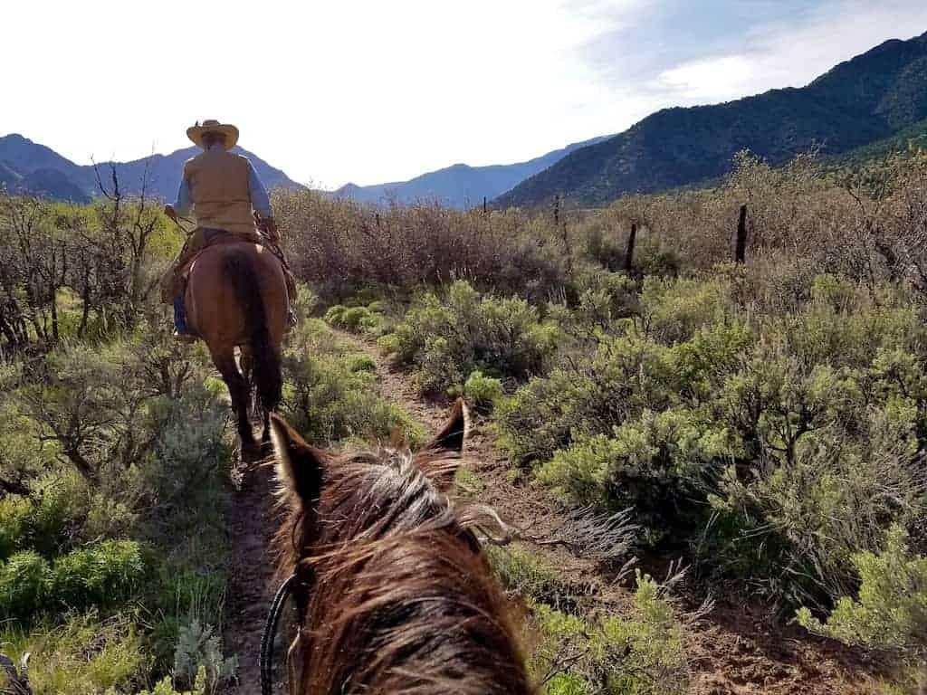 gateway canyons cattle herding horseback ride