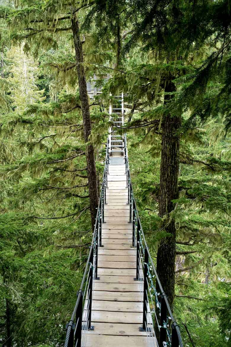 whistler tree trek footbridge